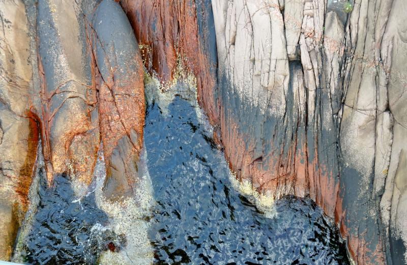 Havsskvalp foto